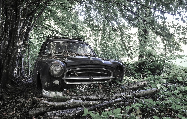 Photo wallpaper machine, forest, Peugeot 403