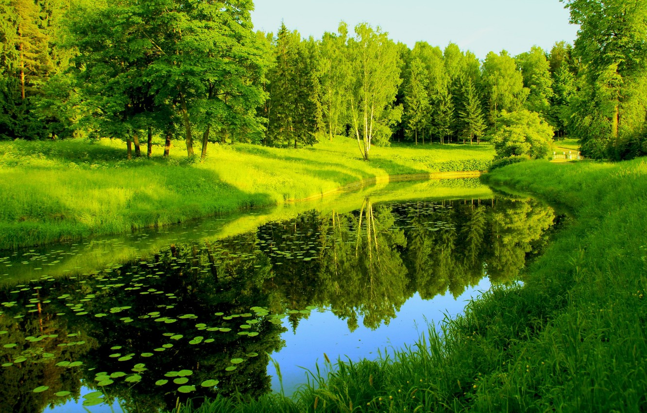 Photo wallpaper greens, reflection, trees, river, Nature