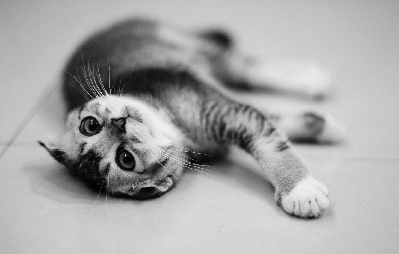 Photo wallpaper kitty, animal, kitten, animal