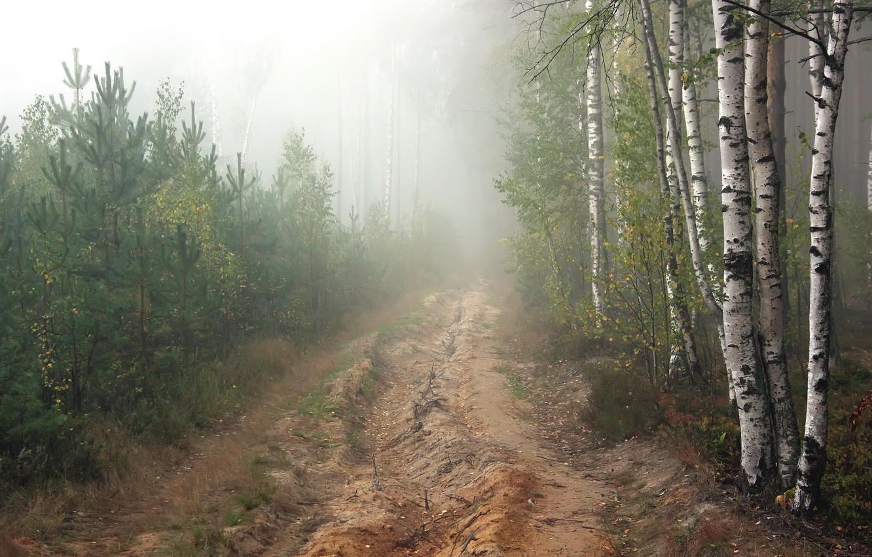 Photo wallpaper road, forest, fog, morning, pine
