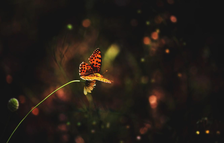 Photo wallpaper flower, grass, butterfly, grass, flower, butterfly