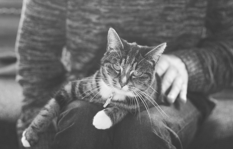 Photo wallpaper cat, cat, lies