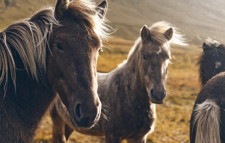 Photo wallpaper autumn, summer, horse, grey, beauty