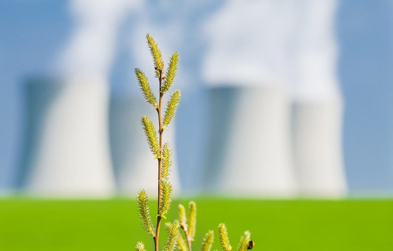 Photo wallpaper greens, macro, nature, background, branch, blur, kidney