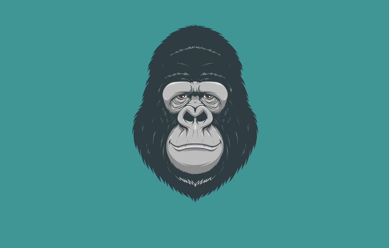 Photo wallpaper minimalism, head, monkey, gorilla, monkey, gorilla
