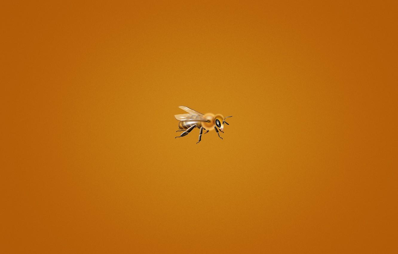 Photo wallpaper bee, minimalism, orange background, small, bee, bee