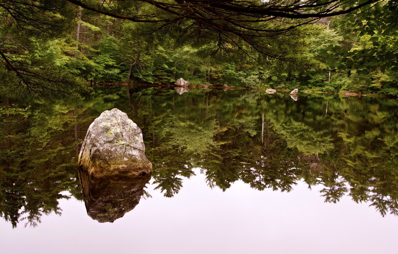 Photo wallpaper forest, water, trees, pond, river, stones, nature, rivers, reflection., vater