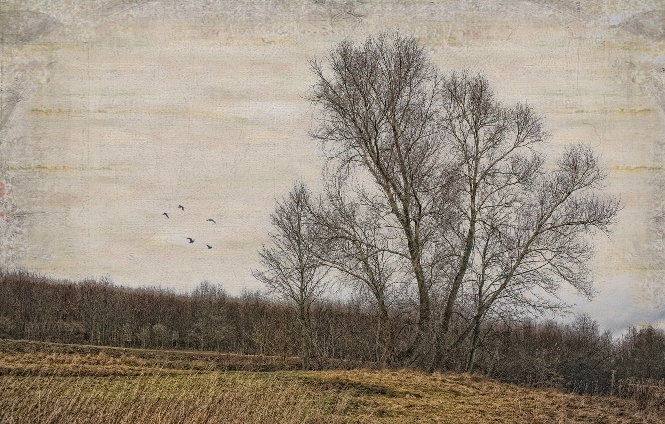 Photo wallpaper field, trees, style, background