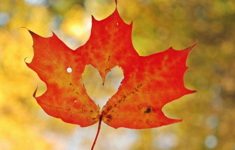 Photo wallpaper autumn, macro, sheet, heart, heart, maple