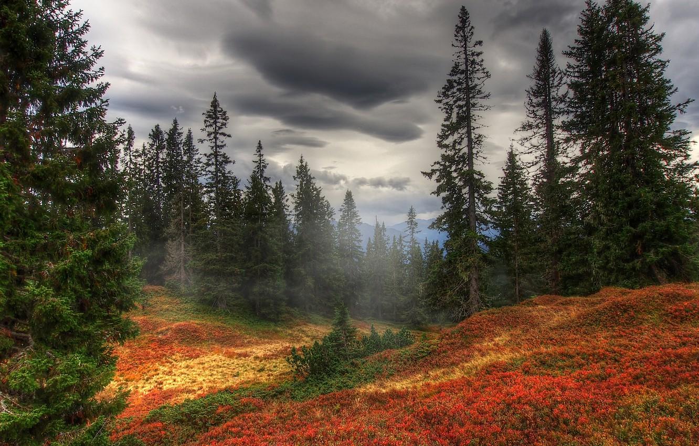 Photo wallpaper autumn, forest, trees, fog