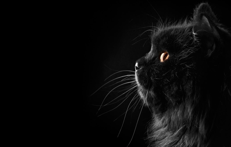 Photo wallpaper Cat, Black background, Background, Black, Cat, Fon, Silhouette