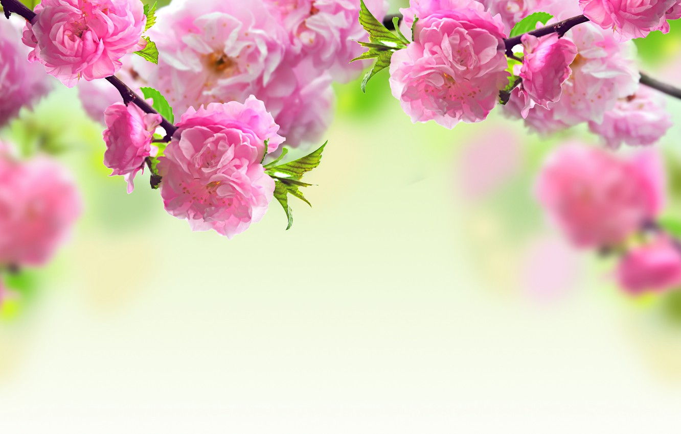 Photo wallpaper flowers, branches, spring, pink, flowering