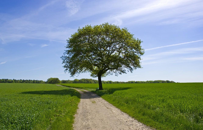 Photo wallpaper road, greens, field, summer, the sky, tree