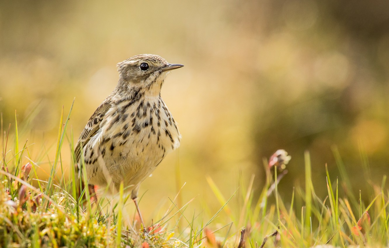 Photo wallpaper grass, glare, bird, meadow