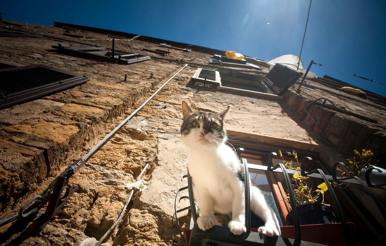 Photo wallpaper cat, cat, house, window, observation