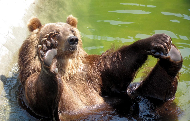 Photo wallpaper bear, hi, POOL