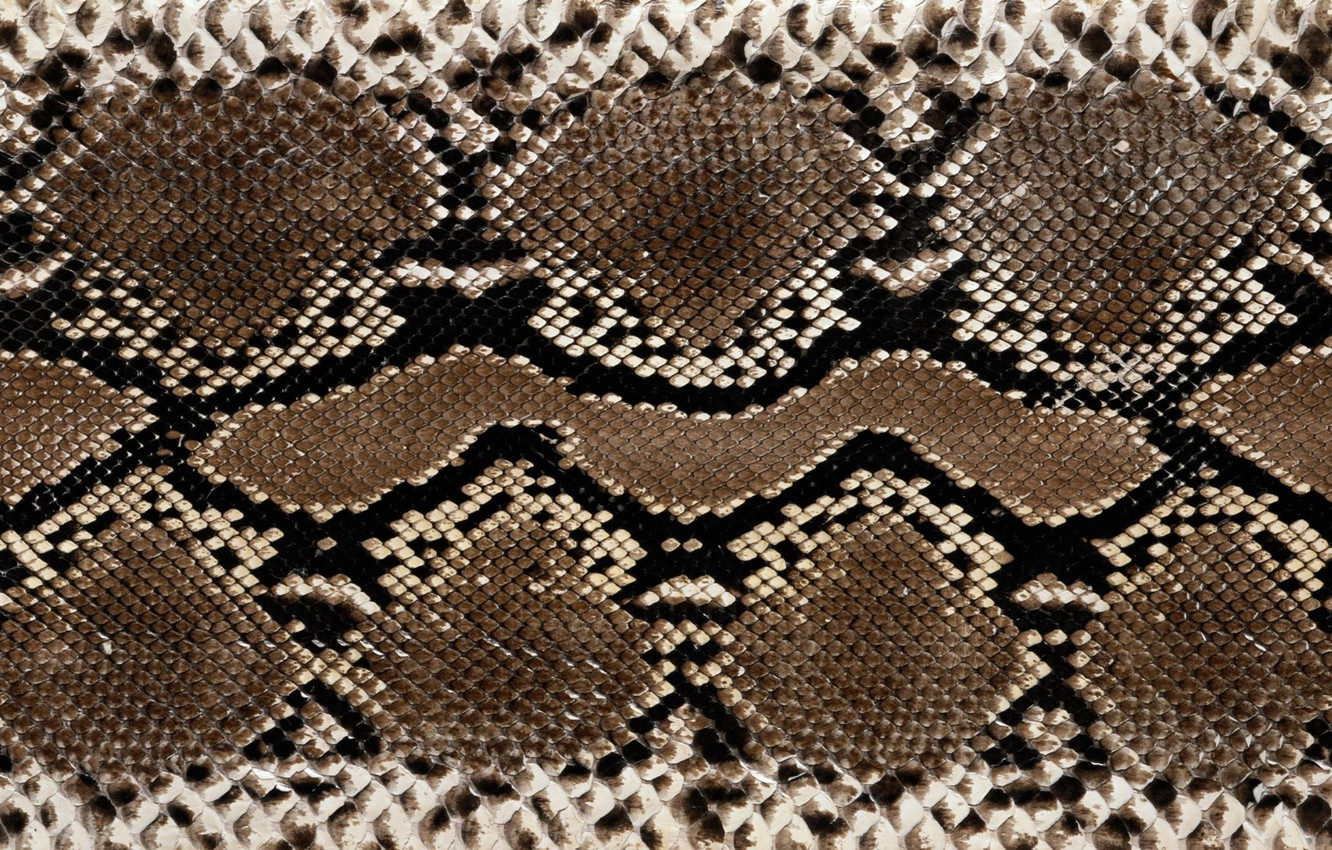 Photo wallpaper snakes, leather, colors, texture