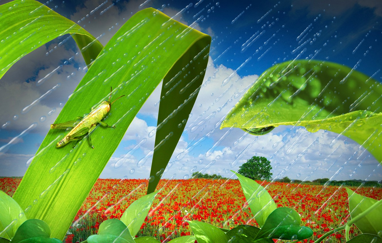 Photo wallpaper field, the sky, grass, leaves, clouds, drops, landscape, nature, rain, Maki, grasshopper