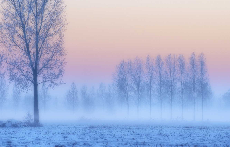 Photo wallpaper frost, field, snow, trees, sunset, fog, lilac, pink, blue, Winter, haze, twilight