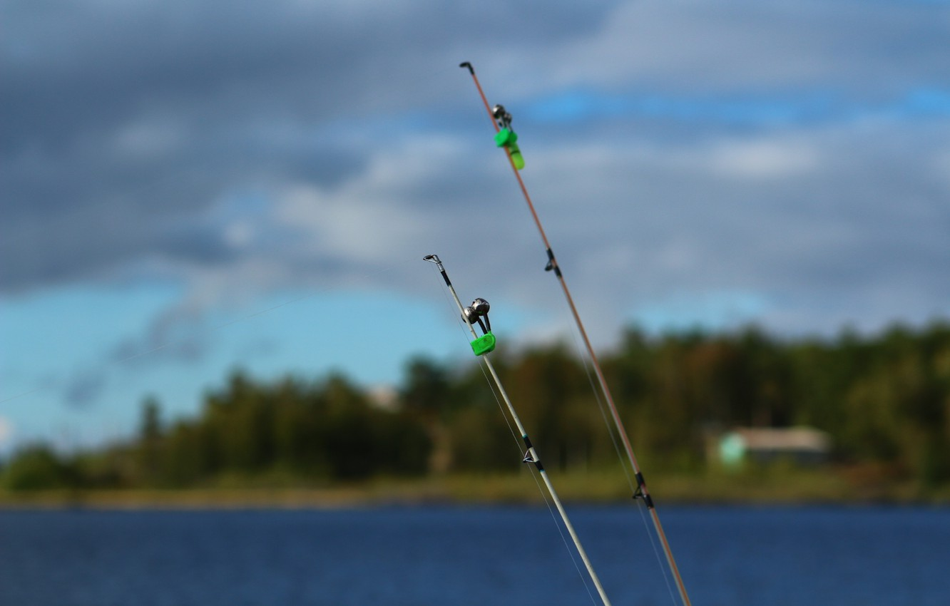 Photo wallpaper forest, background, stay, fishing