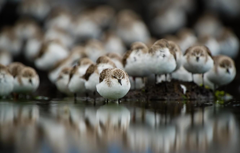 Photo wallpaper birds, nature, background