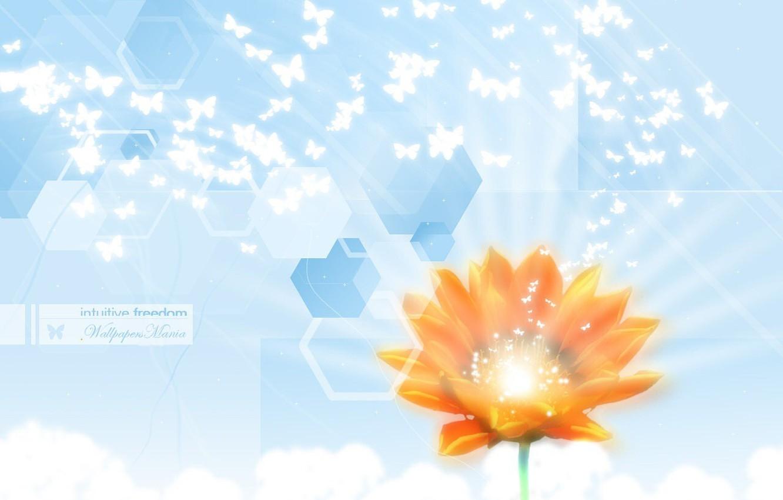 Photo wallpaper flower, lchost, light, butterfly, purity, mosaic