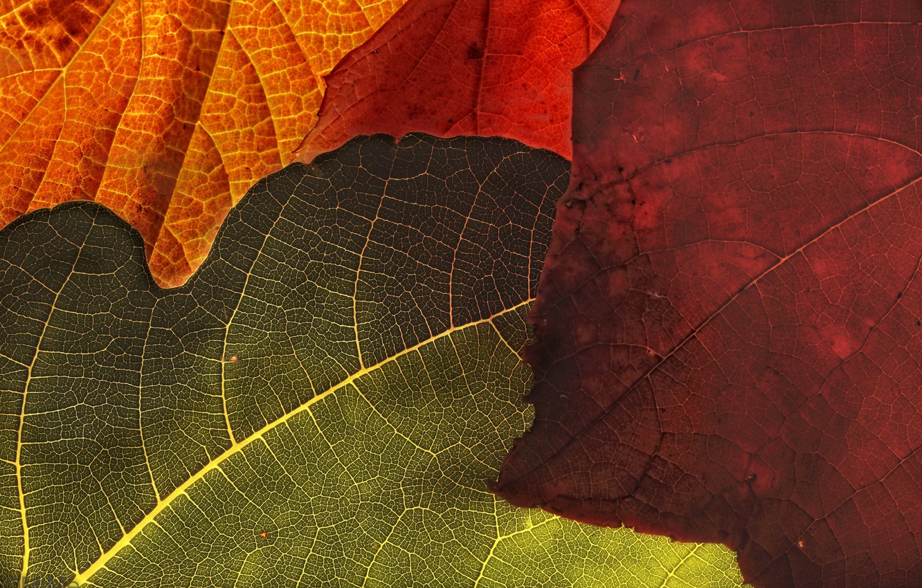 Photo wallpaper leaves, macro, background, color