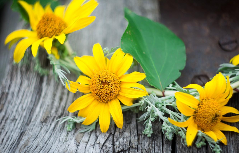 Photo wallpaper greens, leaves, flowers, yellow, wreath, beautiful wreath