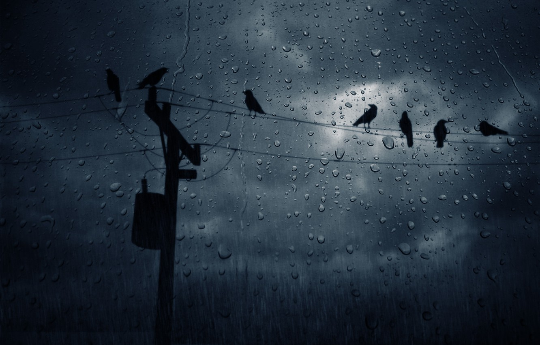 Photo wallpaper drops, night, wire, crows