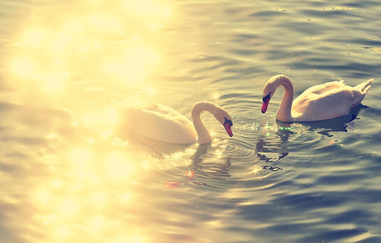 Photo wallpaper birds, lake, swan, swans, lake, animal