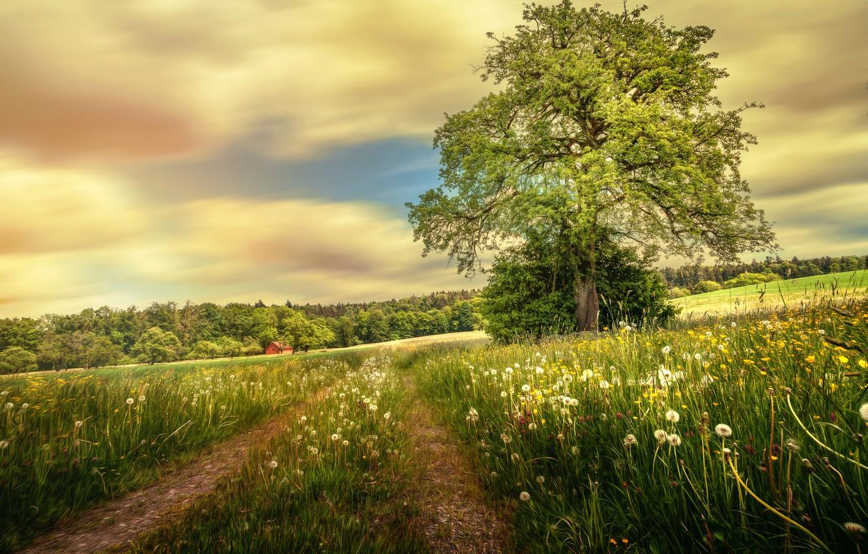 Photo wallpaper road, field, summer, tree, treatment, dandelions, Into the green