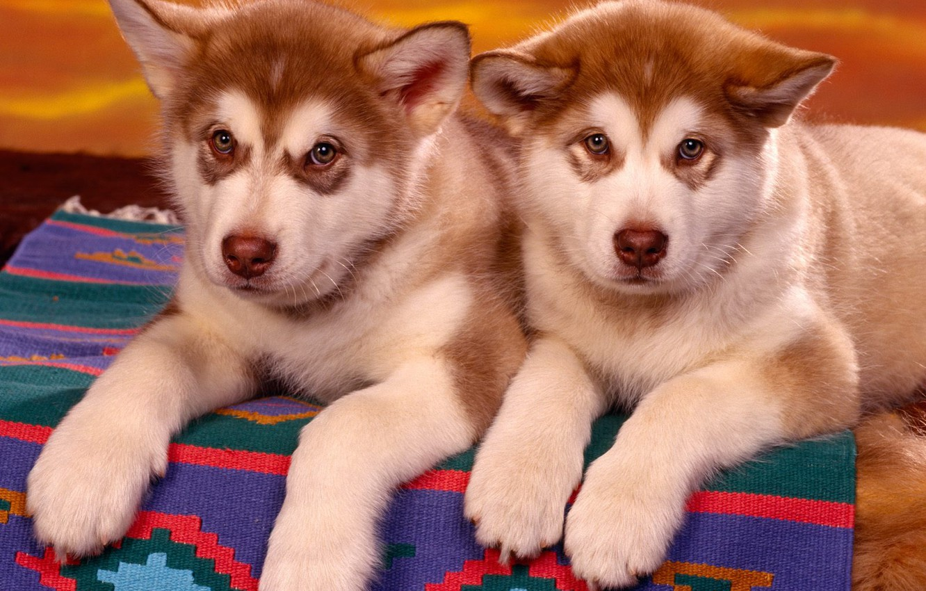 Photo wallpaper animals, puppies, two
