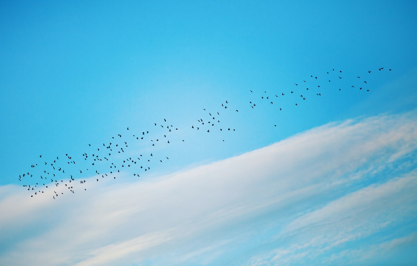 Photo wallpaper the sky, birds, nature, minimalism