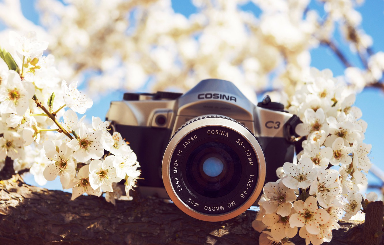 Photo wallpaper flowers, camera, the camera
