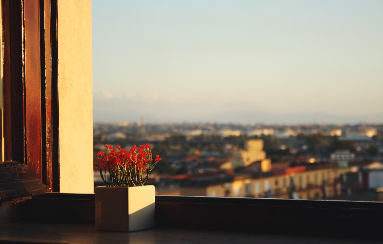 Photo wallpaper the sky, flowers, view, window, pot, sill