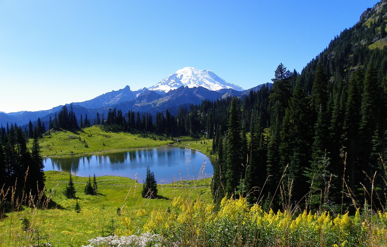 Photo wallpaper forest, the sky, snow, flowers, mountains, nature, lake, spruce, slope, meadow, top