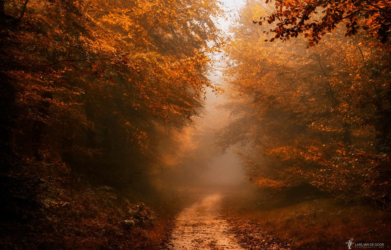 Photo wallpaper autumn, forest, nature, path