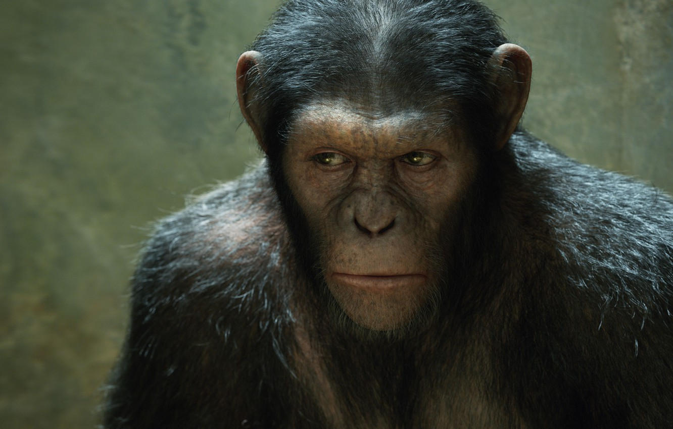 Wallpaper Monkey Monkey Rise Of The Planet Of The Apes