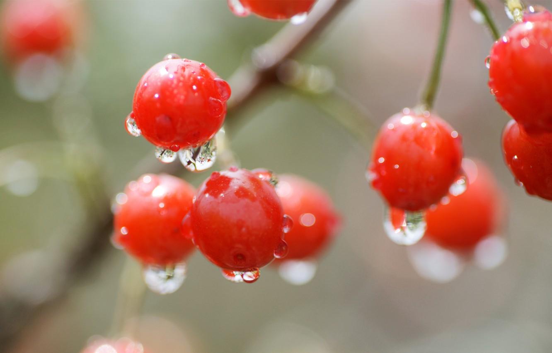 Photo wallpaper drops, macro, cherry, berry, red