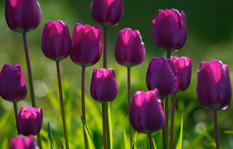 Photo wallpaper forest, flower, summer, grass, light, flowers, freshness, Park, plants, spring, morning, garden, tulips, flowering, flowers, …