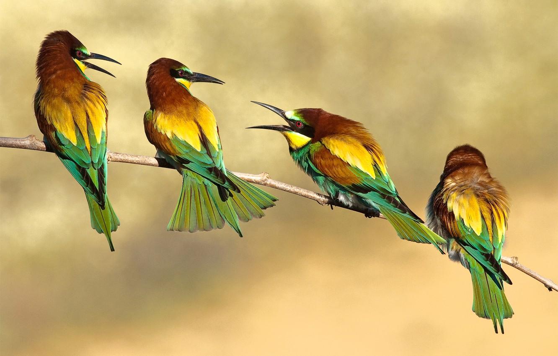 Photo wallpaper birds, branch, bee-eaters