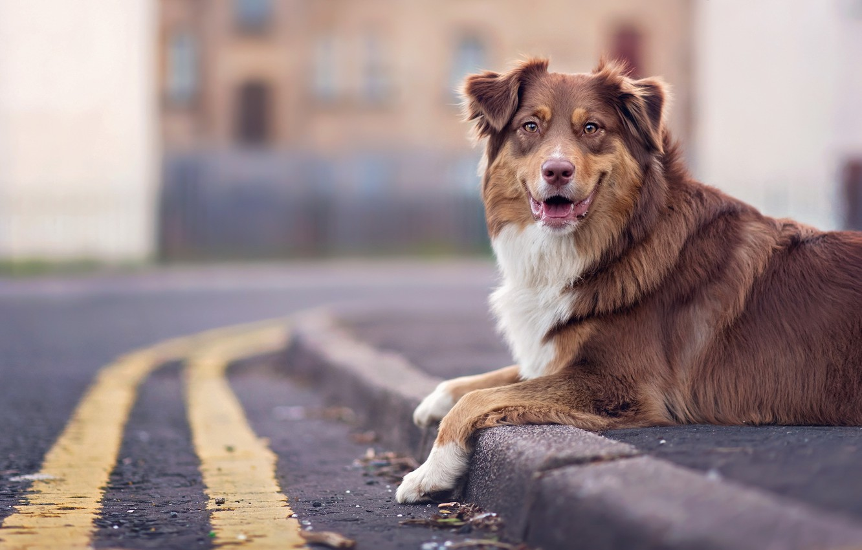 Photo wallpaper look, each, street, dog