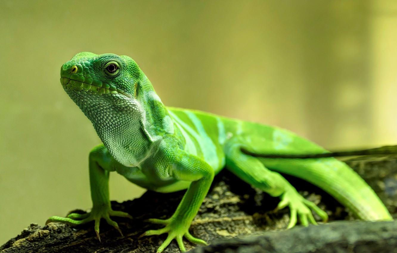 Photo wallpaper nature, background, lizard