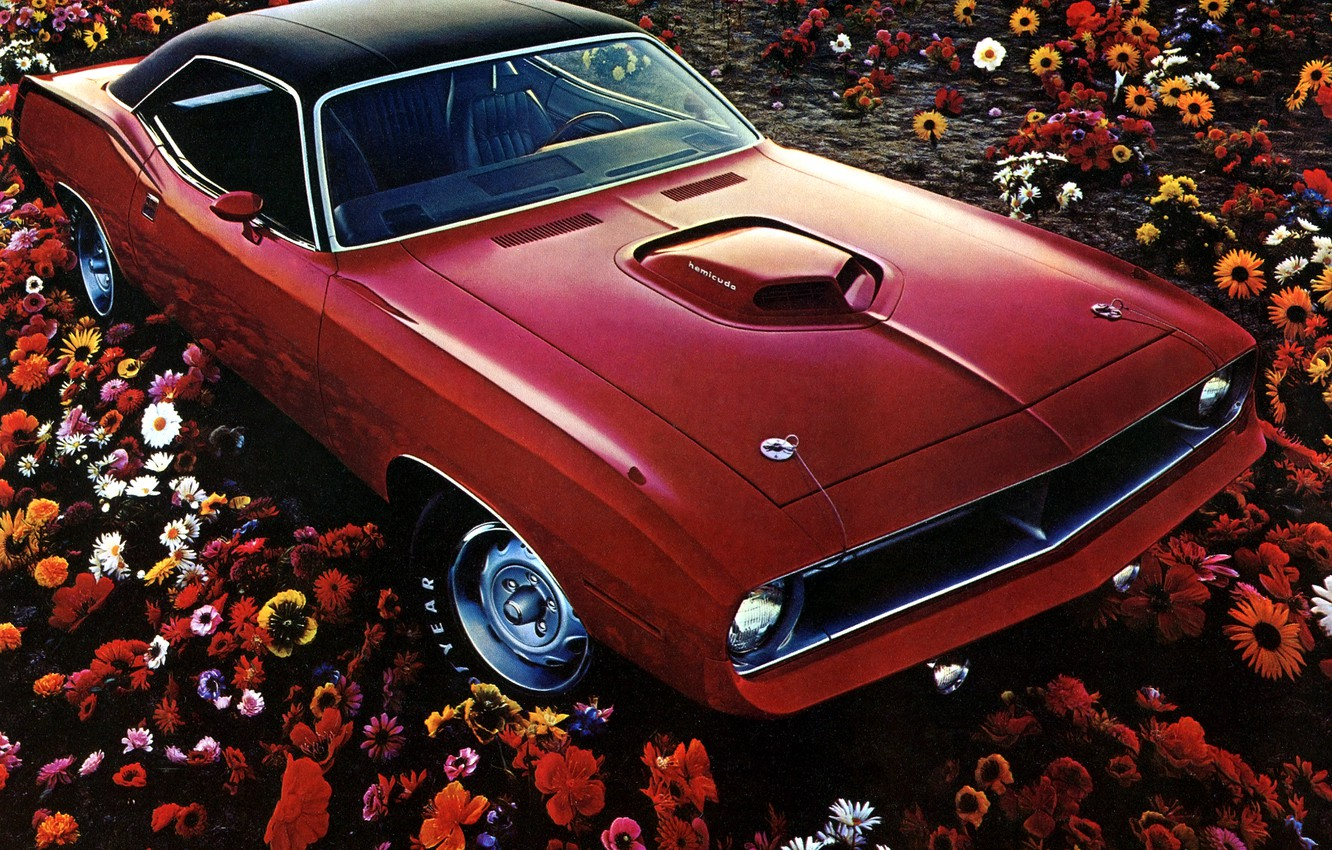 Photo wallpaper field, flowers, red, 1970, Plymouth, Plymouth, Muscle Car, Hemi CUDA