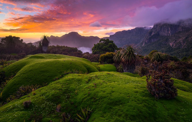 Photo wallpaper forest, the sky, clouds, trees, mountains, fog, rocks, dawn, Australia, the bushes, Tasmania