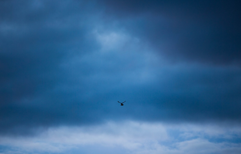 Photo wallpaper the sky, bird, minimalism