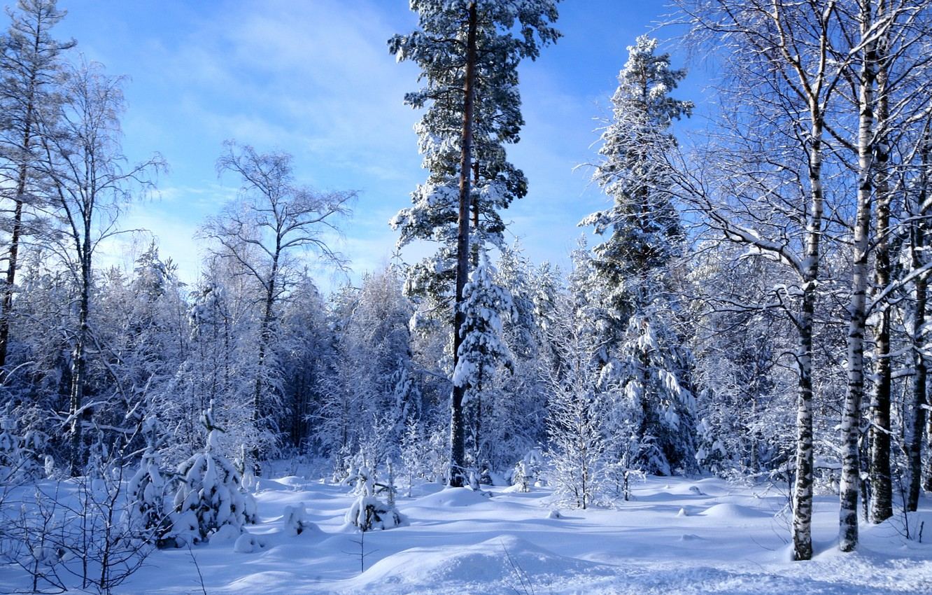 Photo wallpaper winter, forest, snow, a lot