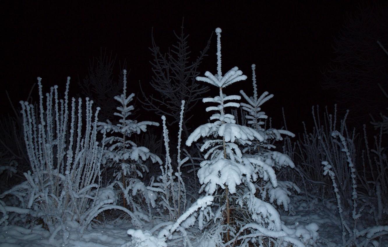 Photo wallpaper winter, forest, light, snow, night, spruce