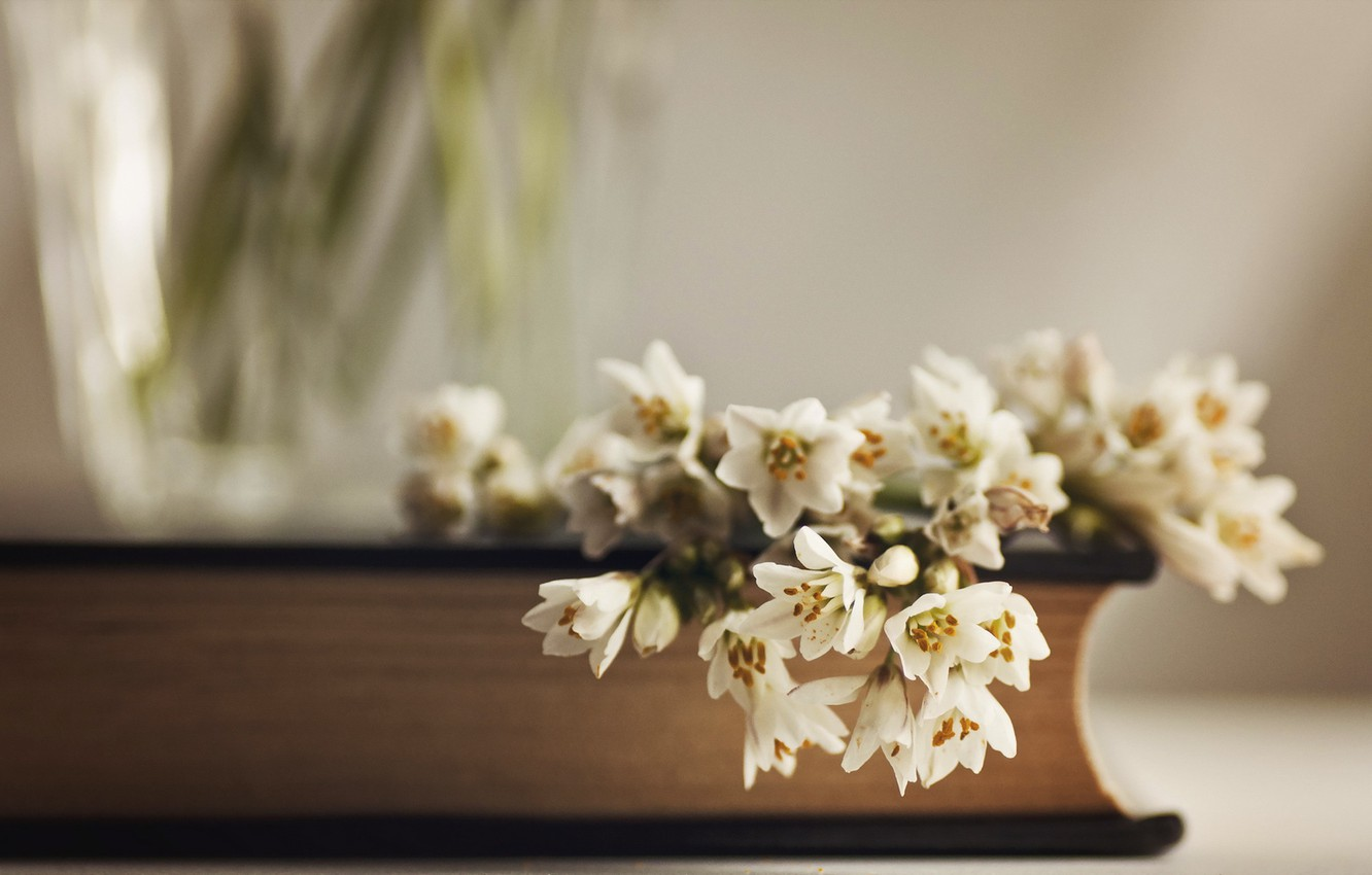 Photo wallpaper flowers, background, book