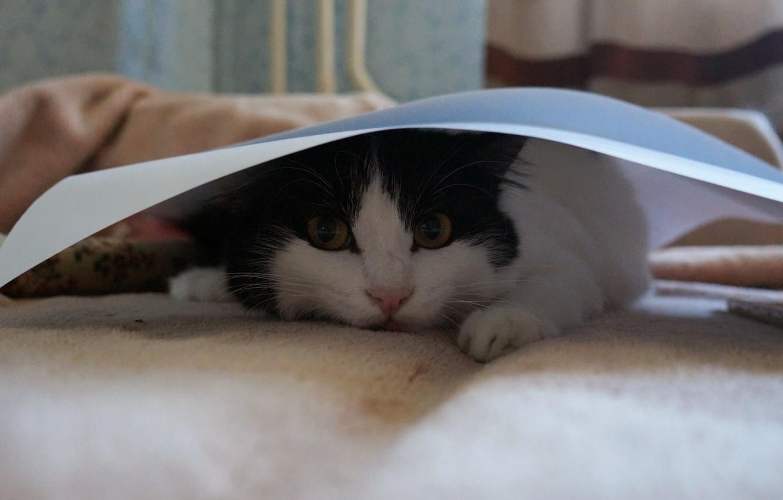 Photo wallpaper cat, cats, beauty